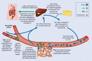 Übergewicht, Cholesterin, Abnehmen, Gewicht reduzieren